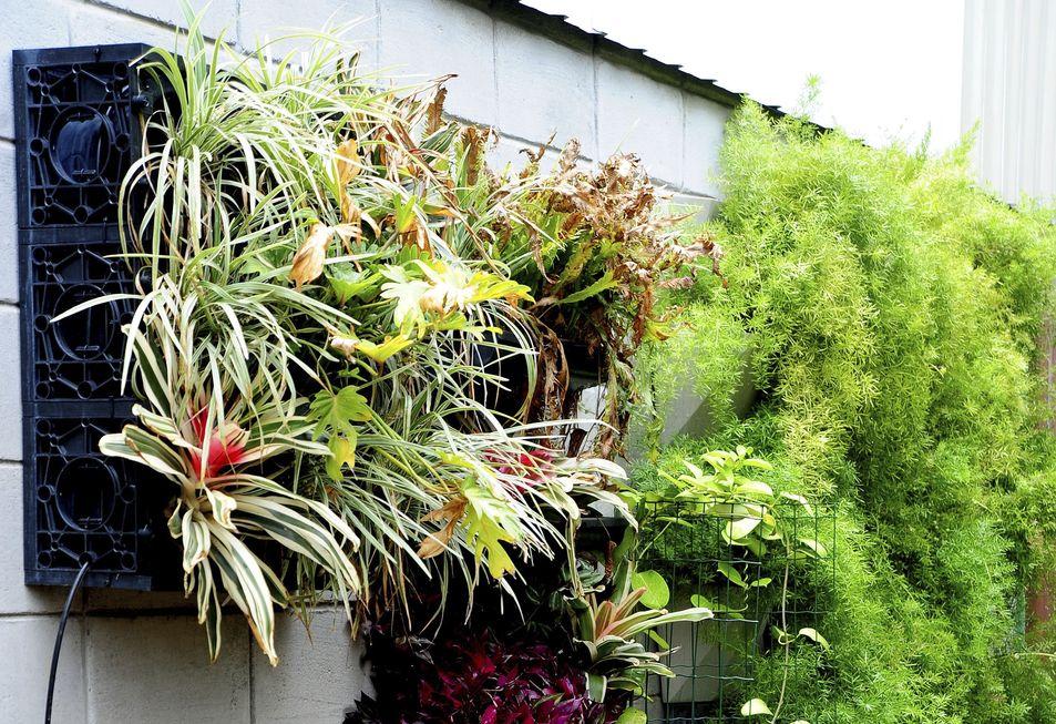 Jardim vertical pode ser aplicado em qualquer parede