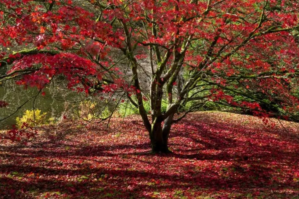 Poema de outono