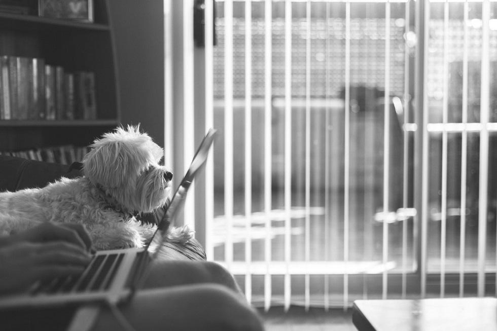 O impacto da pandemia no comportamento dos cães