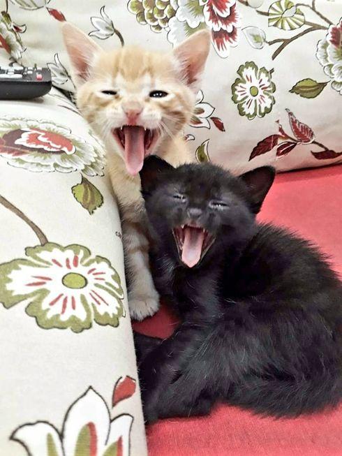 A origem do seu gatinho