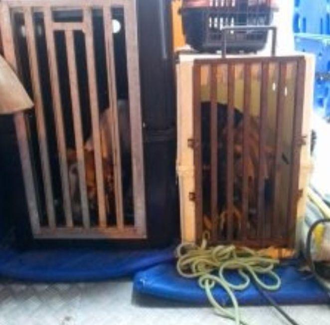 Cães viviam em situação de abandono na Vila Haro