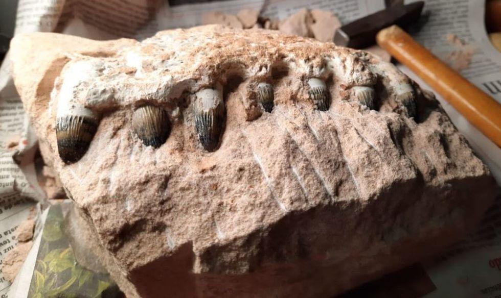 Obra em rodovia descobre fósseis de dinossauros